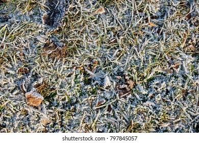 frozen grass background