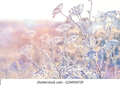 frozen grass in frost day. gentle winter landscape. clear frosty weather of winter. beautiful winter background. copy space