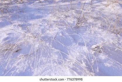 Frozen grass in sunshine in cold winter