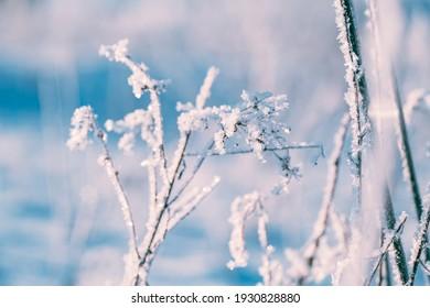 frozen grass in winter sezon - Shutterstock ID 1930828880