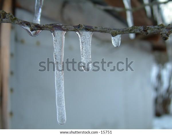 frozen ice branch