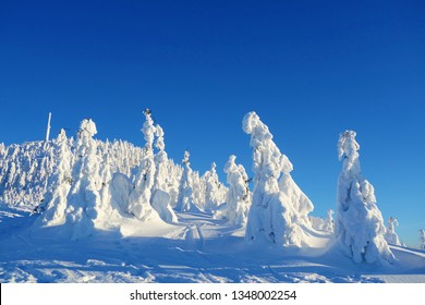 Frozen ice sculptures made of trees covered by snow on a sunny and frosty day in Lysa Hora, Beskydy, Czech Republic, Central Europe