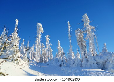 Frozen ice sculptures made of trees covered by snow on a sunny and frosty day in Beskydy mountains, Czech Republic