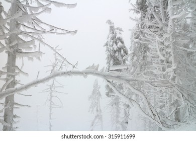 frozen and iced winter landscape with tree silhouette