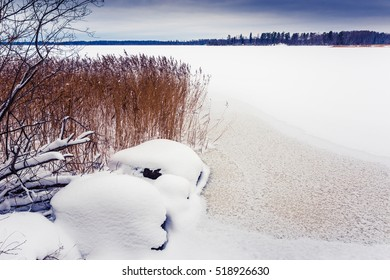 Frozen lake with cane among the winter forest. Image in the blue toning