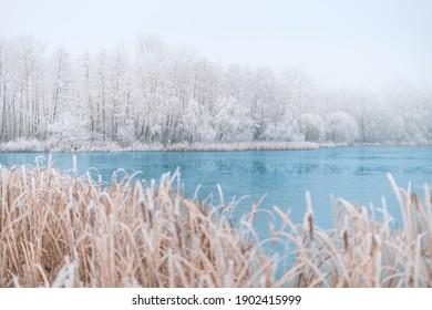 Frozen lake in snowy forest landscape. White sky soft sunset sunrise light, idyllic white nature. Winter scow scenery, seasonal nature