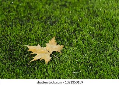Frozen leaf on astroturf