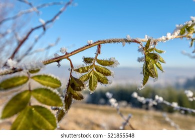 Frozen leaves with background