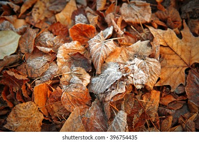 Frozen leaves close up. Natural background