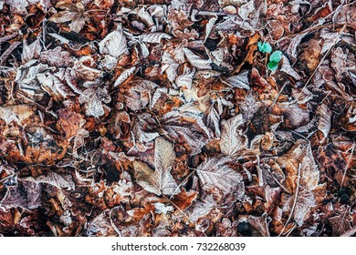 frozen leaves in the forest