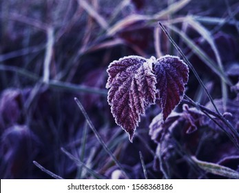 Frozen Leaves. Texture of some leaves covered by snow and ice on a winter day. Background of fall dead leaves, Hoar frosted grass, weeds and leaves