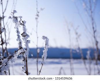 Frozen lifeless dead vegetation at sunset, on a cold sunny winter evening.