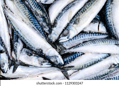 Frozen mackerel. Frozen group of fish. iced atlantic fish. Mackerel. Mackerel pattern. Mackerel texture.