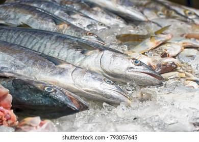 Frozen mackerels in ice saving for selling.