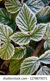 frozen mulberry leaves