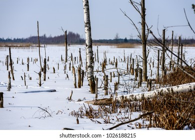 frozen naked dry and dead forest trees in snowy landscape with white lake covered in ice
