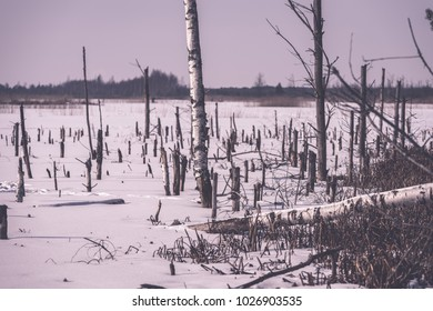frozen naked dry and dead forest trees in snowy landscape with white lake covered in ice - vintage retro effect