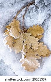 frozen oaks leafs
