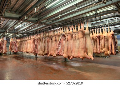 Frozen pig carcasses hanging on hooks, red meat stored in cold storage room.