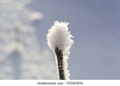 Frozen plant bud. Tiny ice needles on top of stalk or branch. Cold winter scene. White snow and freezing weather. Seasons changing. Close up icy concept, frost.