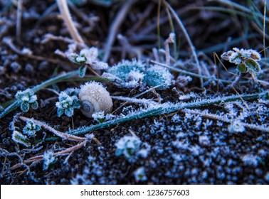 Frozen plants covered with hoar background or texture