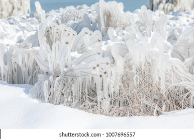 Frozen plants covered in ice