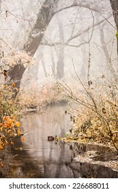 Frozen plants and trees with details and fog in the park at the end of autumn. Image has grain texture visible on its maximum size