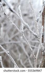 Frozen plants winter