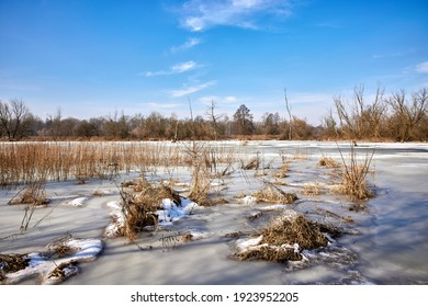 The frozen pool of the Narew River