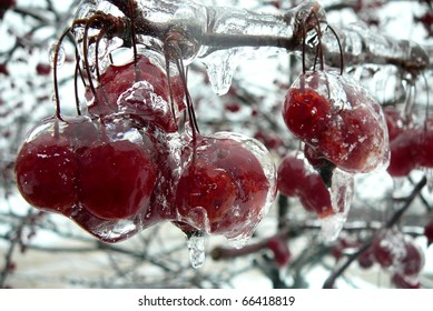 Frozen Red Berry Bunches