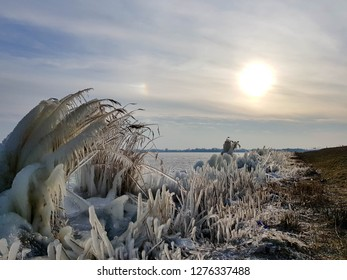 Frozen reeds along a lake with sunset in Almere Netherlands