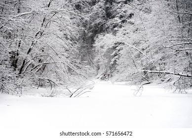 Frozen river in forest, winter, nature, trees in the snow