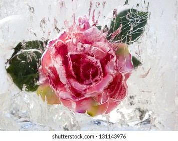 A frozen rose inside ice