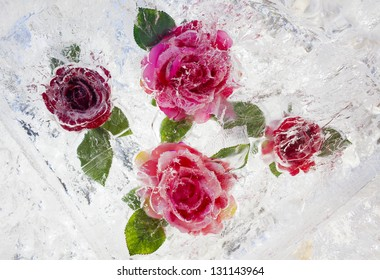 Frozen roses inside ice