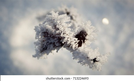 Frozen sculpture of leaves on white background