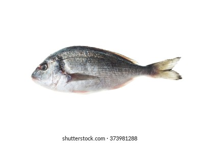 Frozen sea bream , Dorado fish isolated on white background