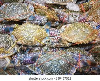 frozen seafood Flower crab,Blue crab,Blue swimmer crab,Blue manna crab,Sand crab on ice in supermarket