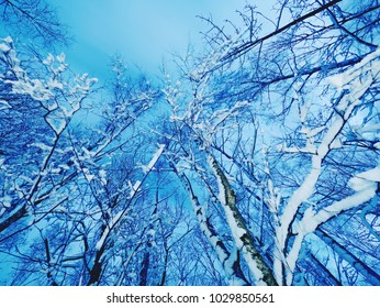 The frozen snow on tree branches in dark night, close up view