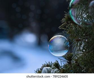 Frozen Soap Bubble on Foliage