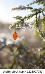 Frozen spruce branch  and birch leaf at sunny winter day