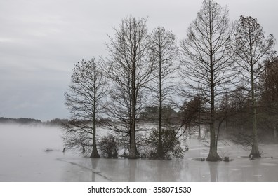 Frozen Stumpy Lake in Virginia Beach, Virginia in fog.
