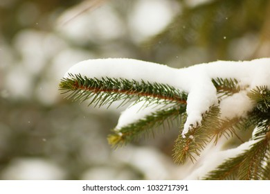 Frozen tree branches, nature in winter. spring background.