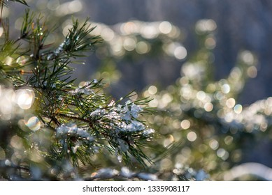 frozen tree branches in winter with blur background