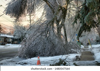 Frozen tree collapses and takes down power lines. This photo was taken after the 2010 ice storm in Toronto which result in a major power outage that lasted several days.