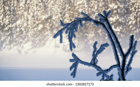 Frozen tree covered with snow on the lake
