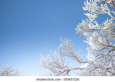 Frozen tree detail and blue sky winter season background