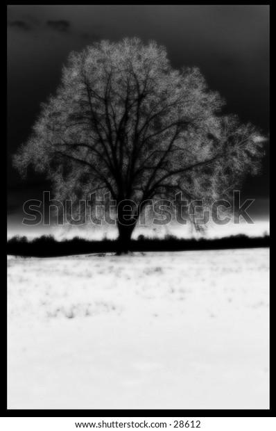 Frozen Tree in Georgia