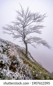 A frozen tree on top of the Zlaty Vrch in Luzicke hory, Czech republic. - Shutterstock ID 1907612395