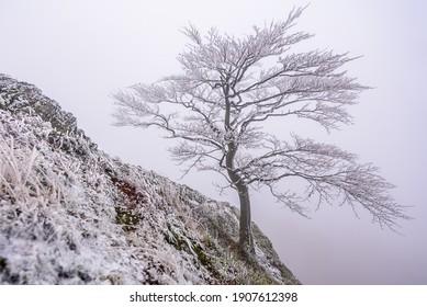 A frozen tree on top of the Zlaty Vrch in Luzicke hory, Czech republic. - Shutterstock ID 1907612398