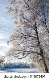Frozen tree overlooking lake in Anchorage, Alaska